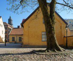 Träd och kullersten framför de gula stenbyggnaderna Kronhusbodarna.