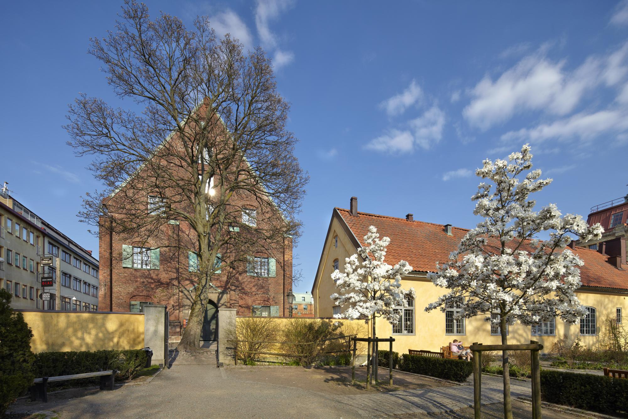 Träd utanför Kronhuset och Kronhusbodarna.