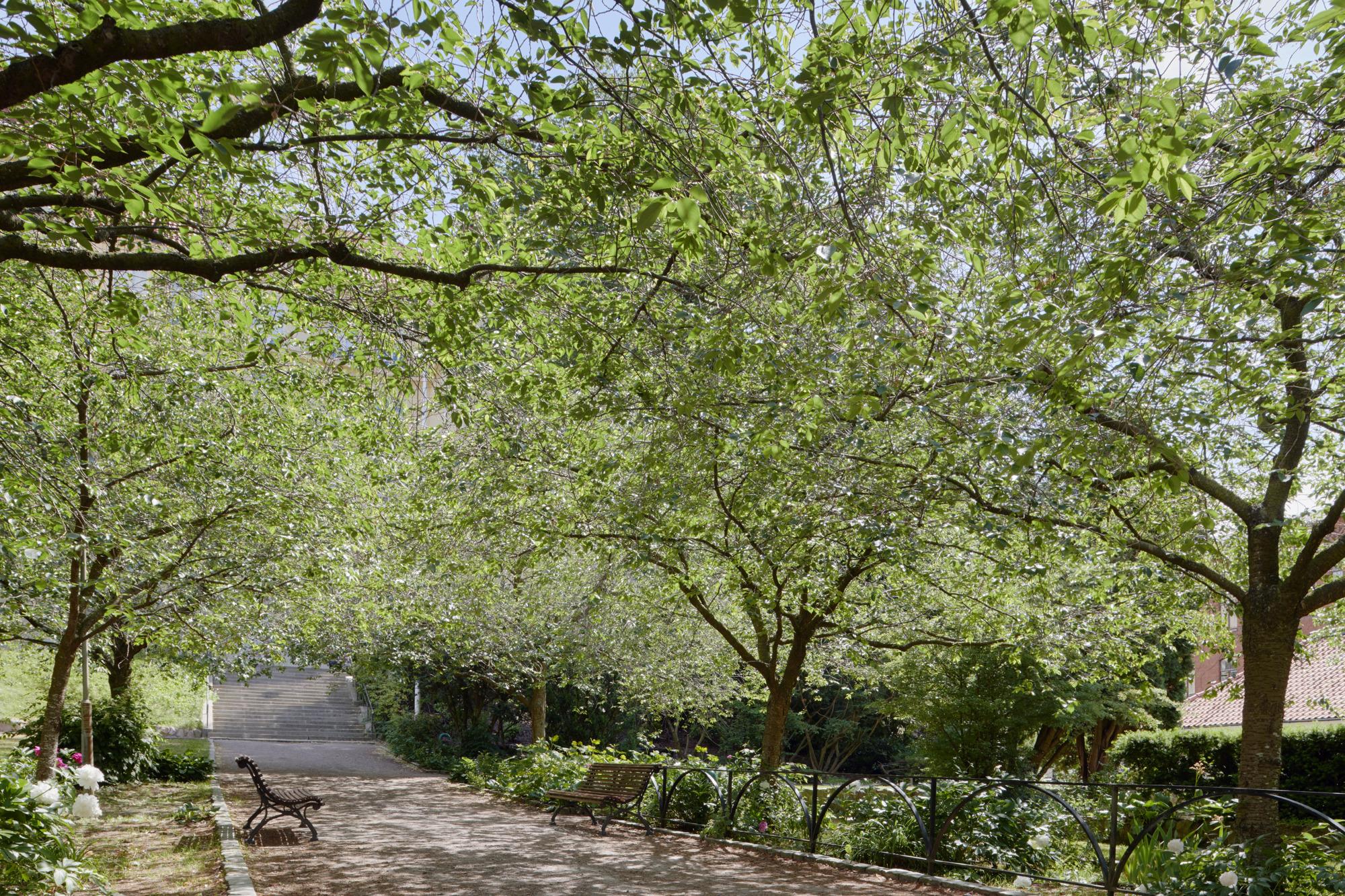Grusgång med parkbänk och träd