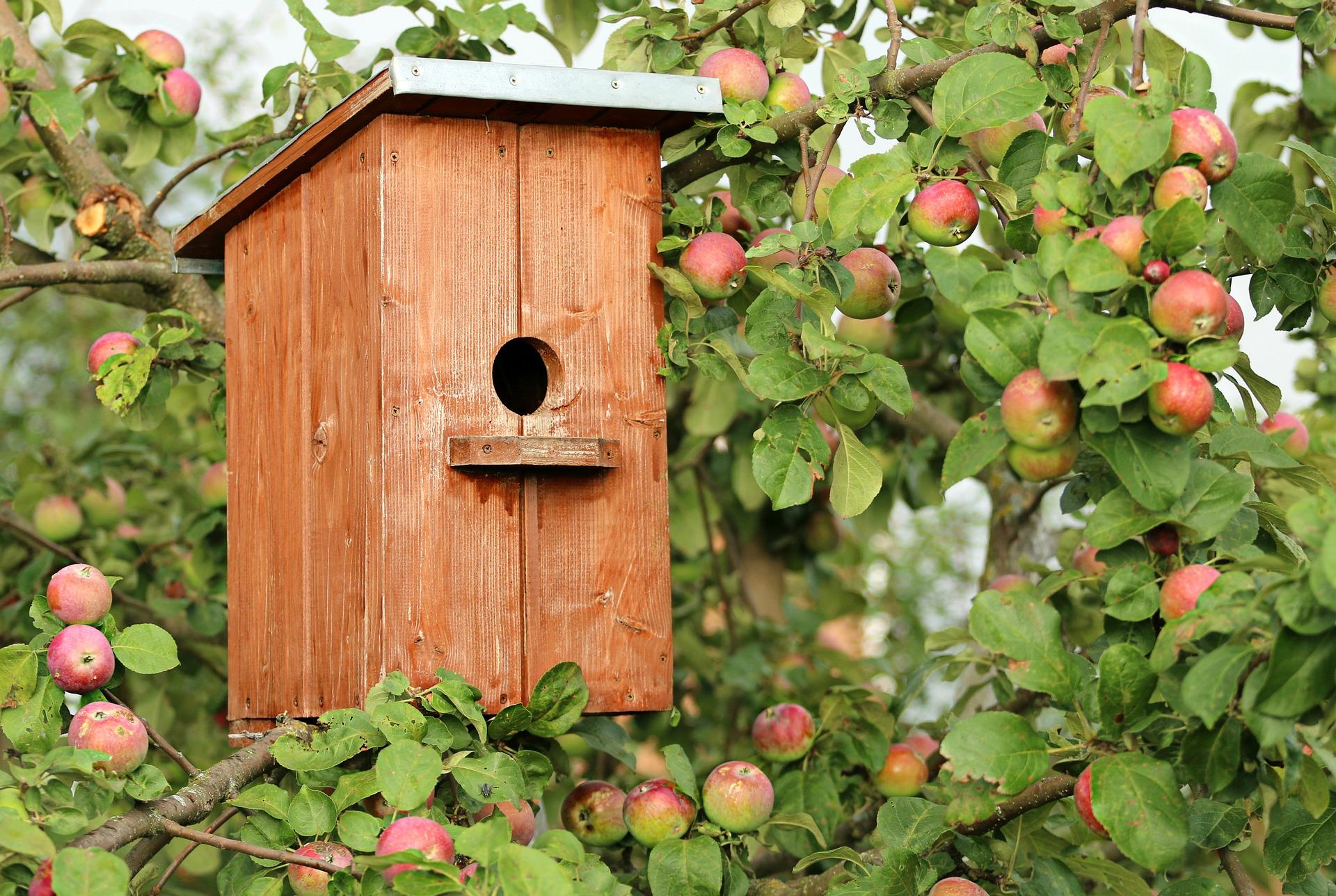 Äppelträd med fågelholk