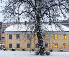 Ett snöprytt träd på baksidan av det gula stenhuset på Postgatan 4.
